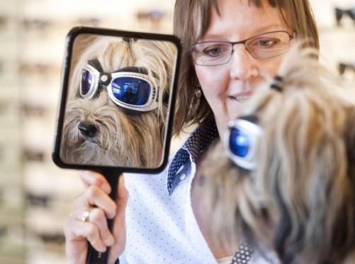 La cagnolina Lucy dall'ottico con occhiali da sole01