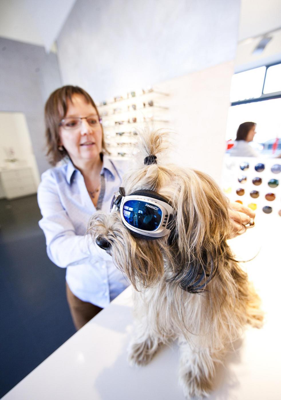 La cagnolina Lucy dall'ottico con occhiali da sole02
