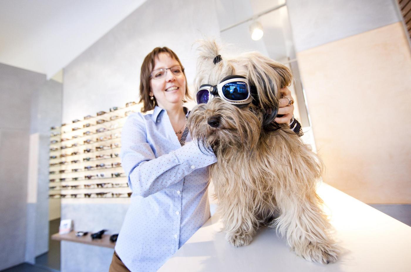 La cagnolina Lucy dall'ottico con occhiali da sole03