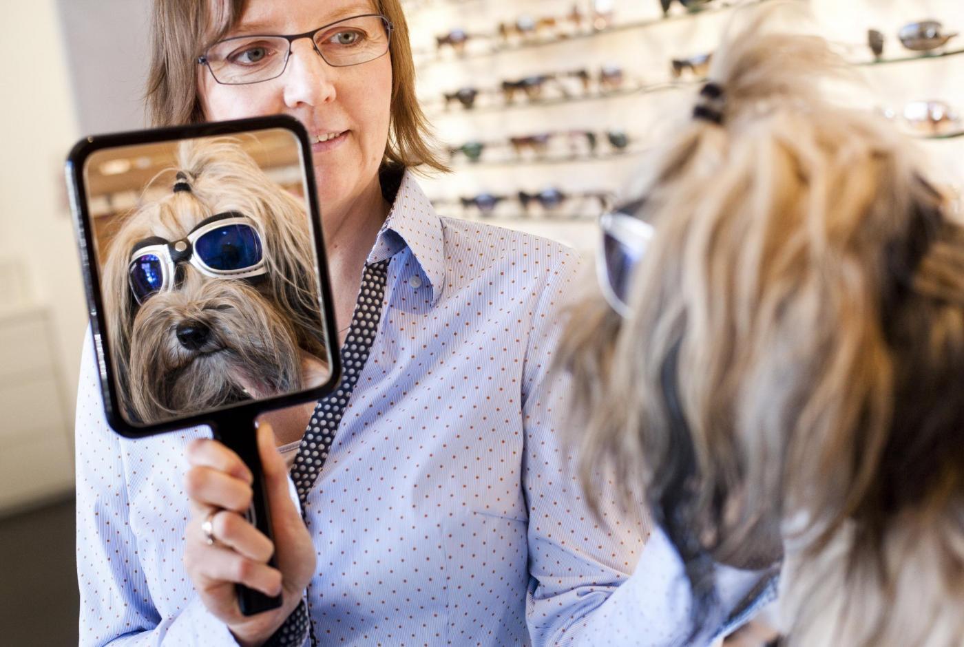 La cagnolina Lucy dall'ottico con occhiali da sole04