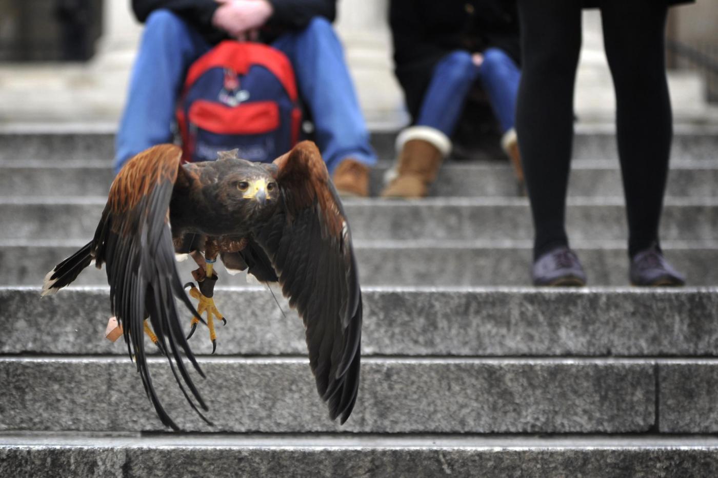 Il falco di Trafalgar square08