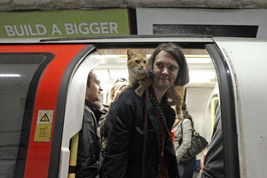 James Bowen gatto Bob 03