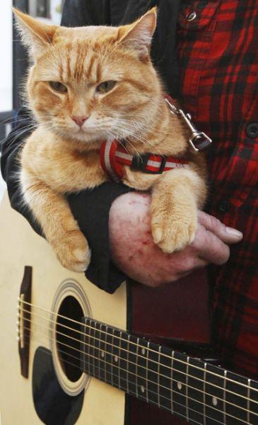 James Bowen gatto Bob 02