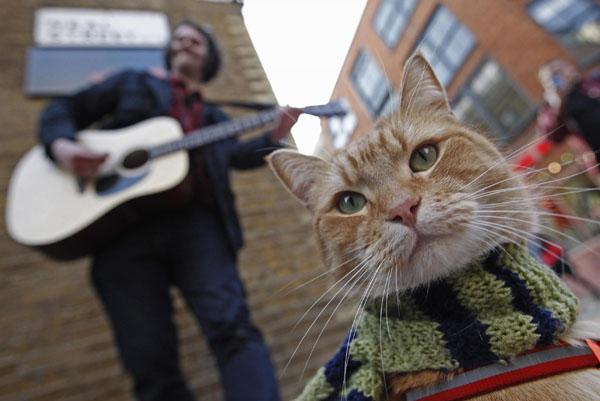 James Bowen gatto Bob 01