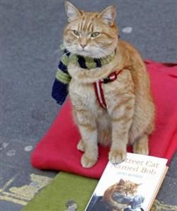 James Bowen gatto Bob 14