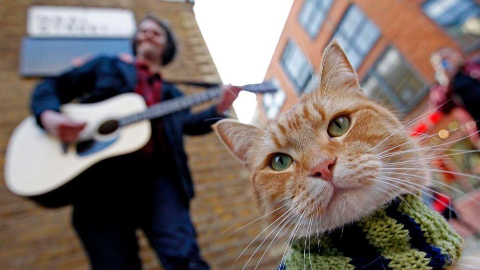 James Bowen gatto Bob 11