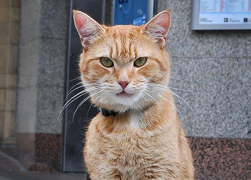 James Bowen gatto Bob 09