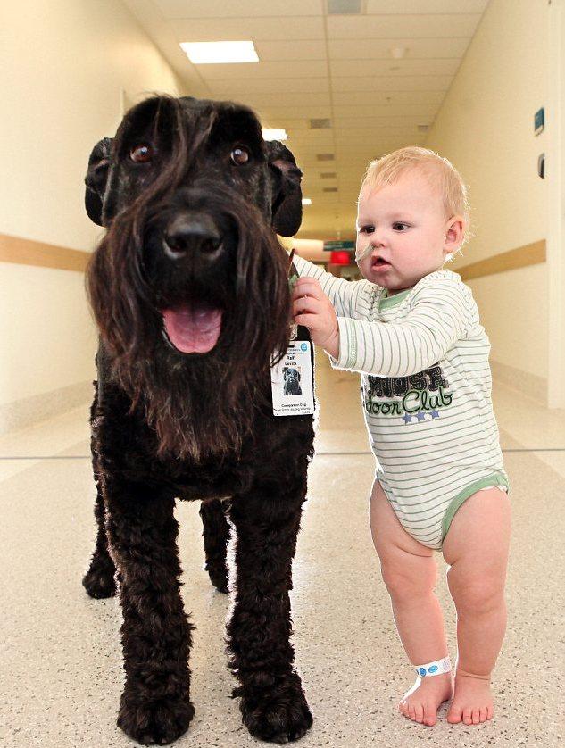 Lo schnauzer che aiuta i bimbi dell'ospedale pediatrico 04
