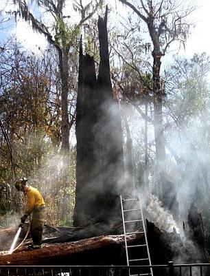 Ragazza incendio quercia di 3500 anni 01