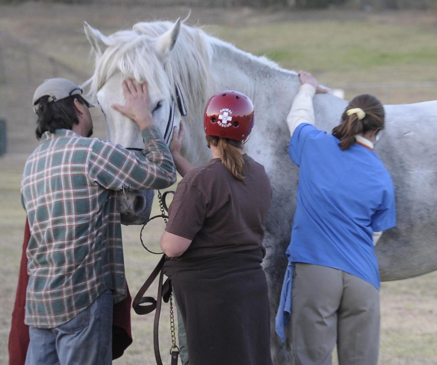 Soccorso ad un cavallo imprigionato nel fango08