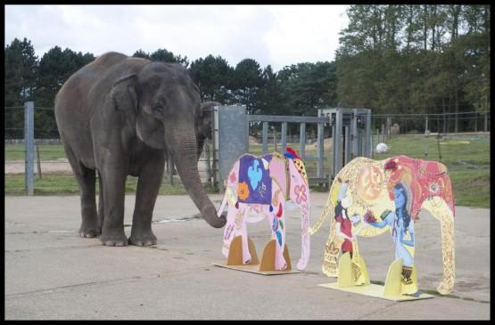 L'elefante pittore 01