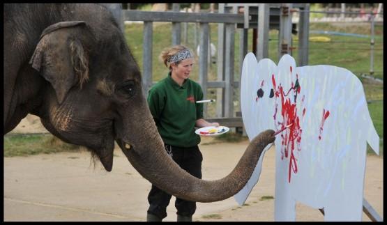 L'elefante pittore 02
