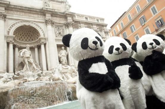 Incontra i Panda, lancio di Global Pambassador 2012 02