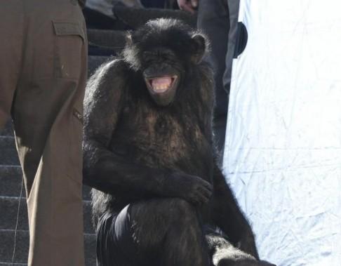 Laetitia Casta shooting con uno scimpanze08