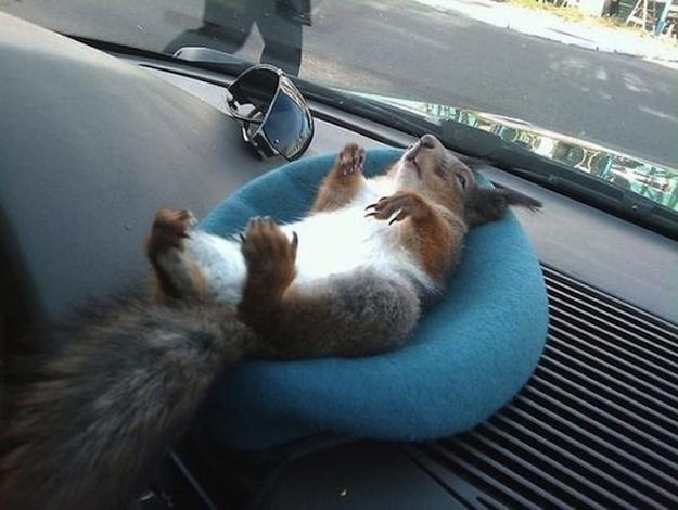 Il tassista che guida con lo scoiattolo 10