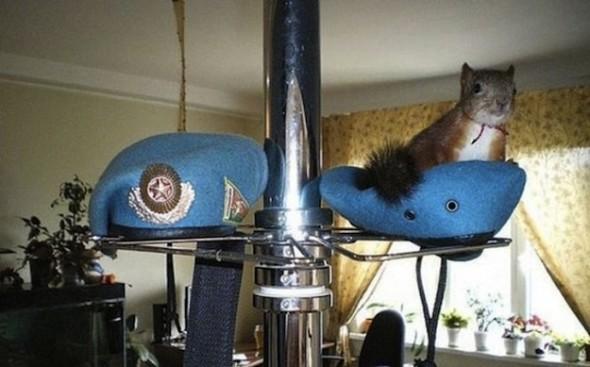 Il tassista che guida con lo scoiattolo 04
