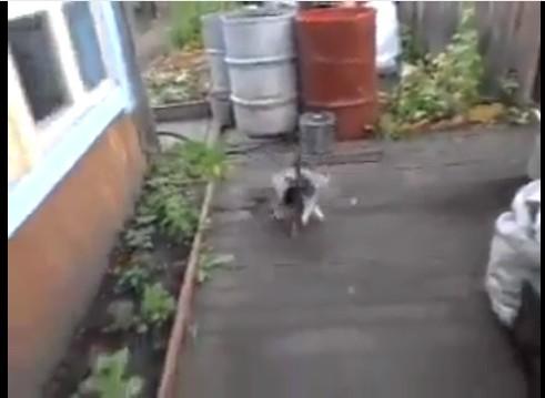 cane gatto insieme