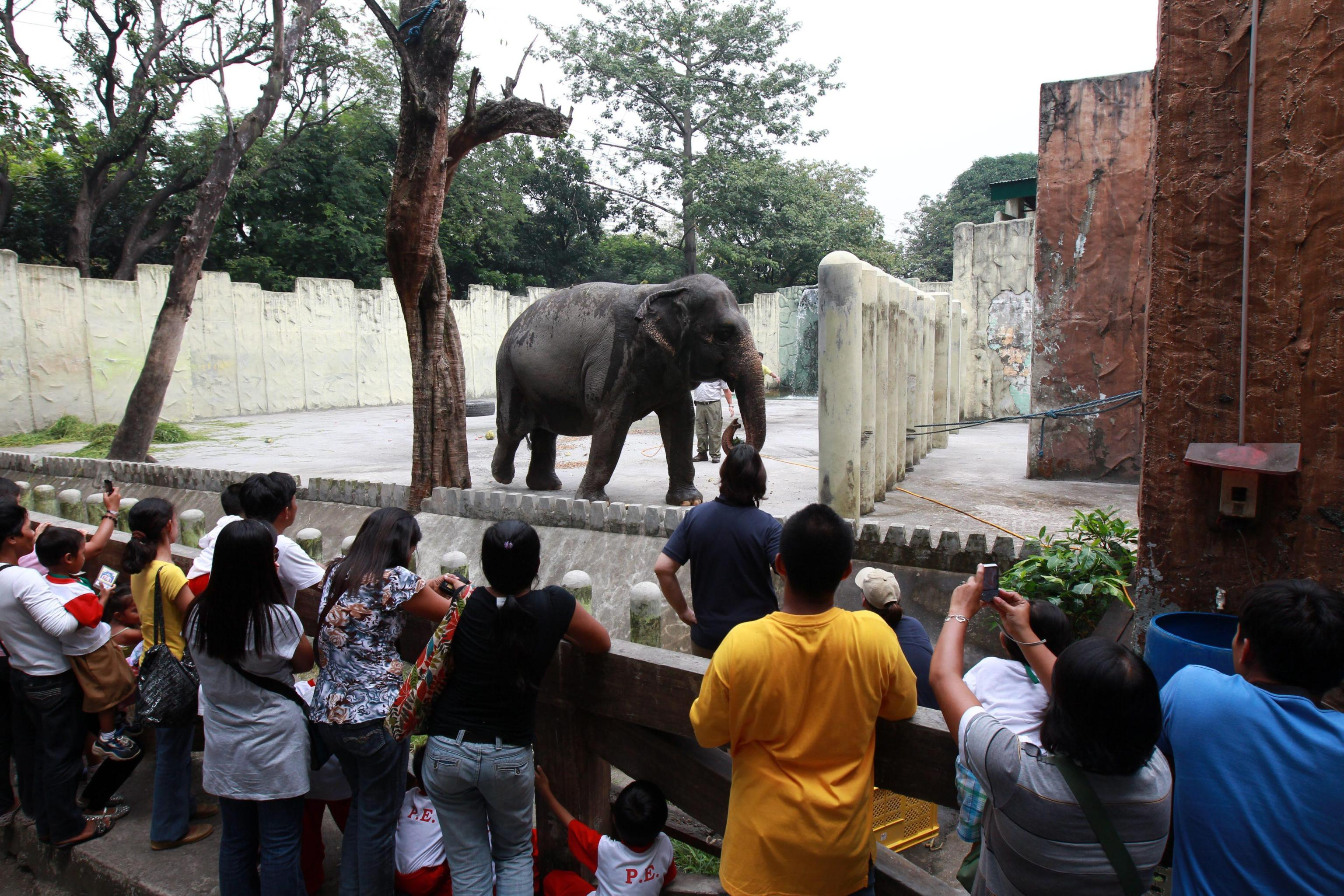 Maali the Lonely Elephant01