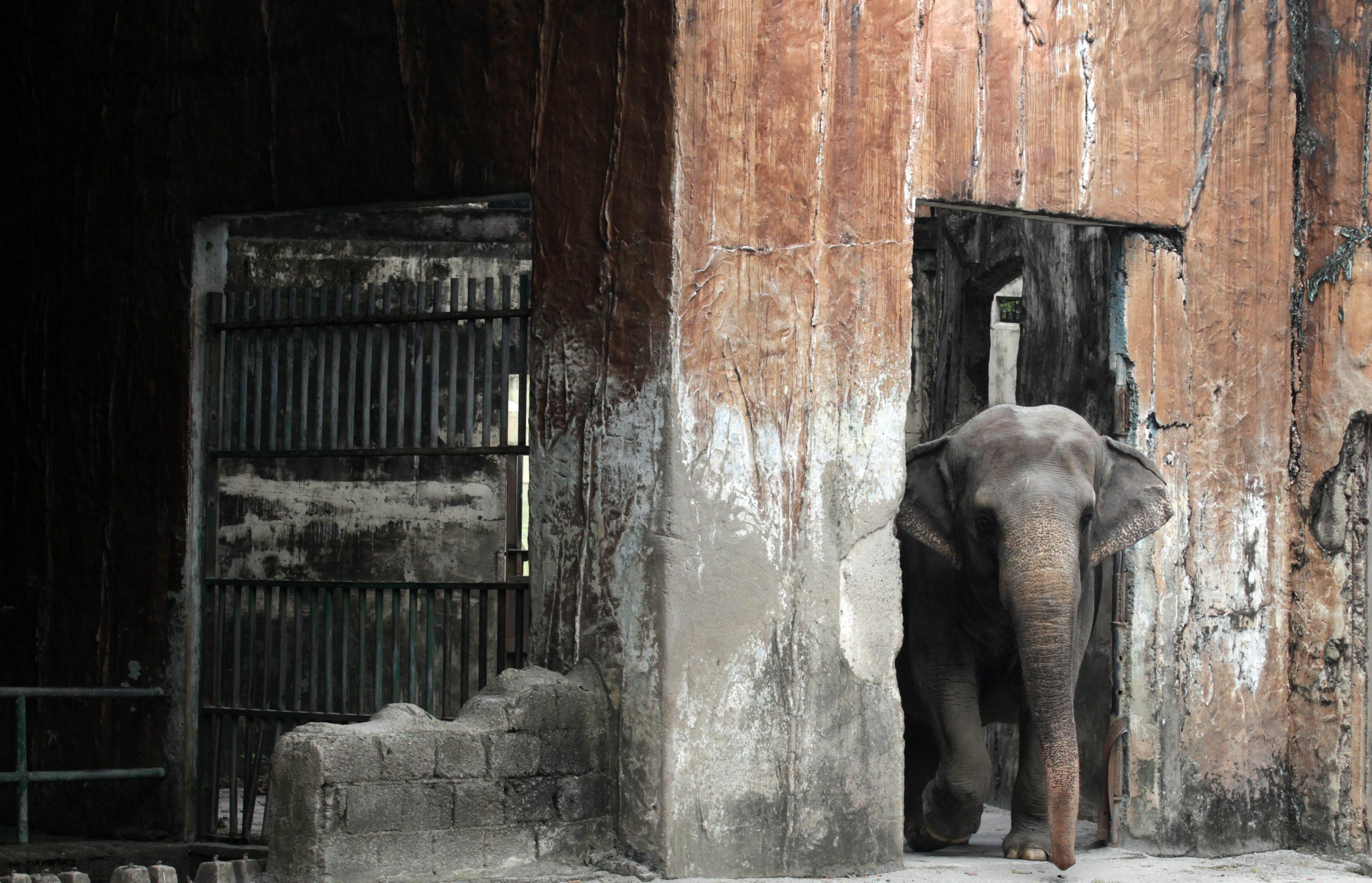 Maali the Lonely Elephant02