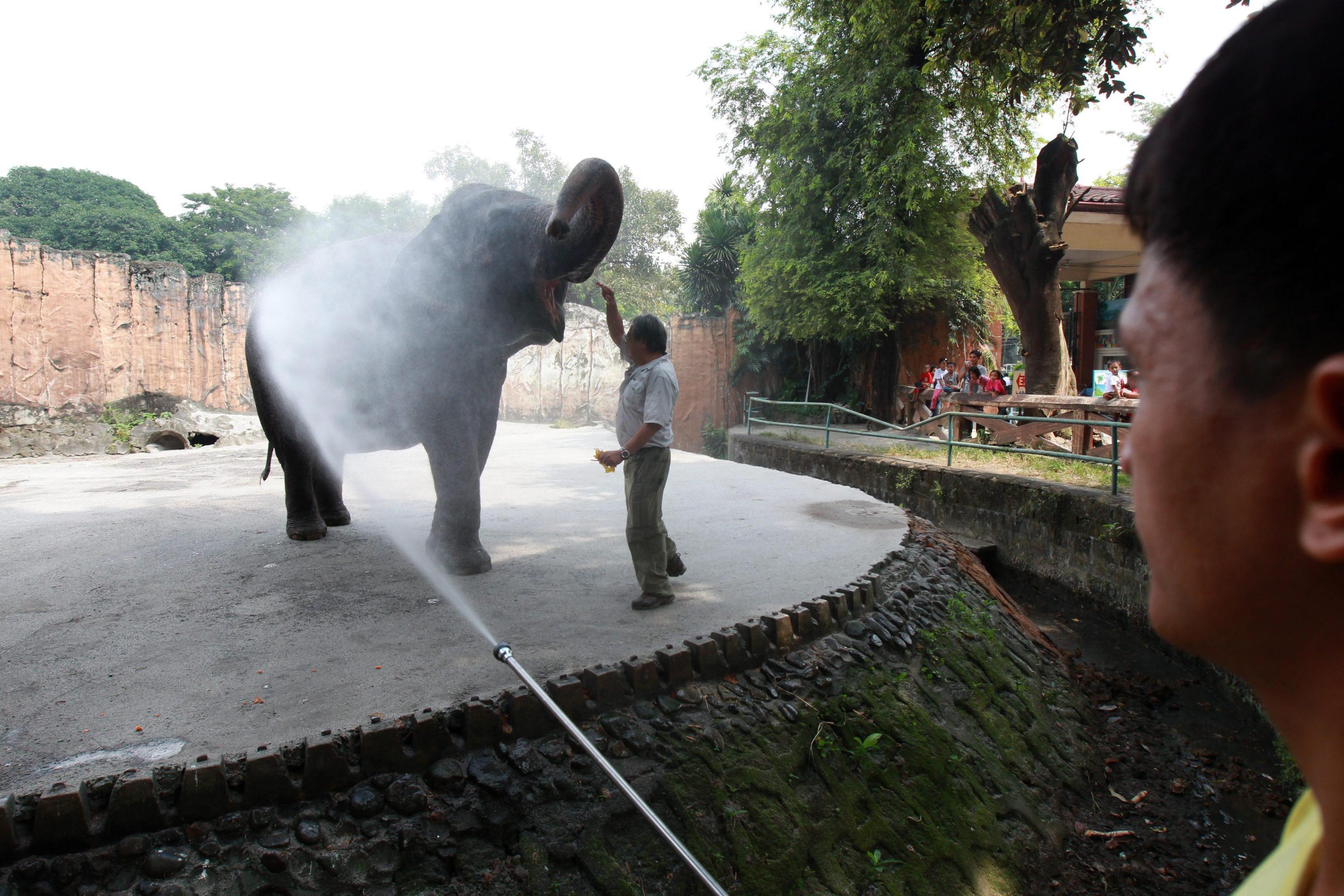 Maali the Lonely Elephant05