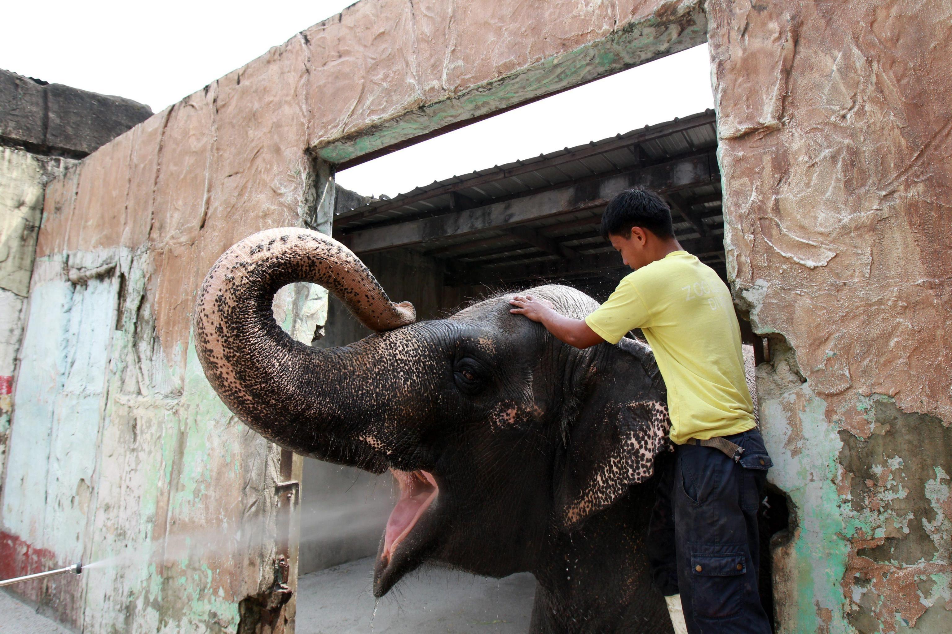Maali the Lonely Elephant06