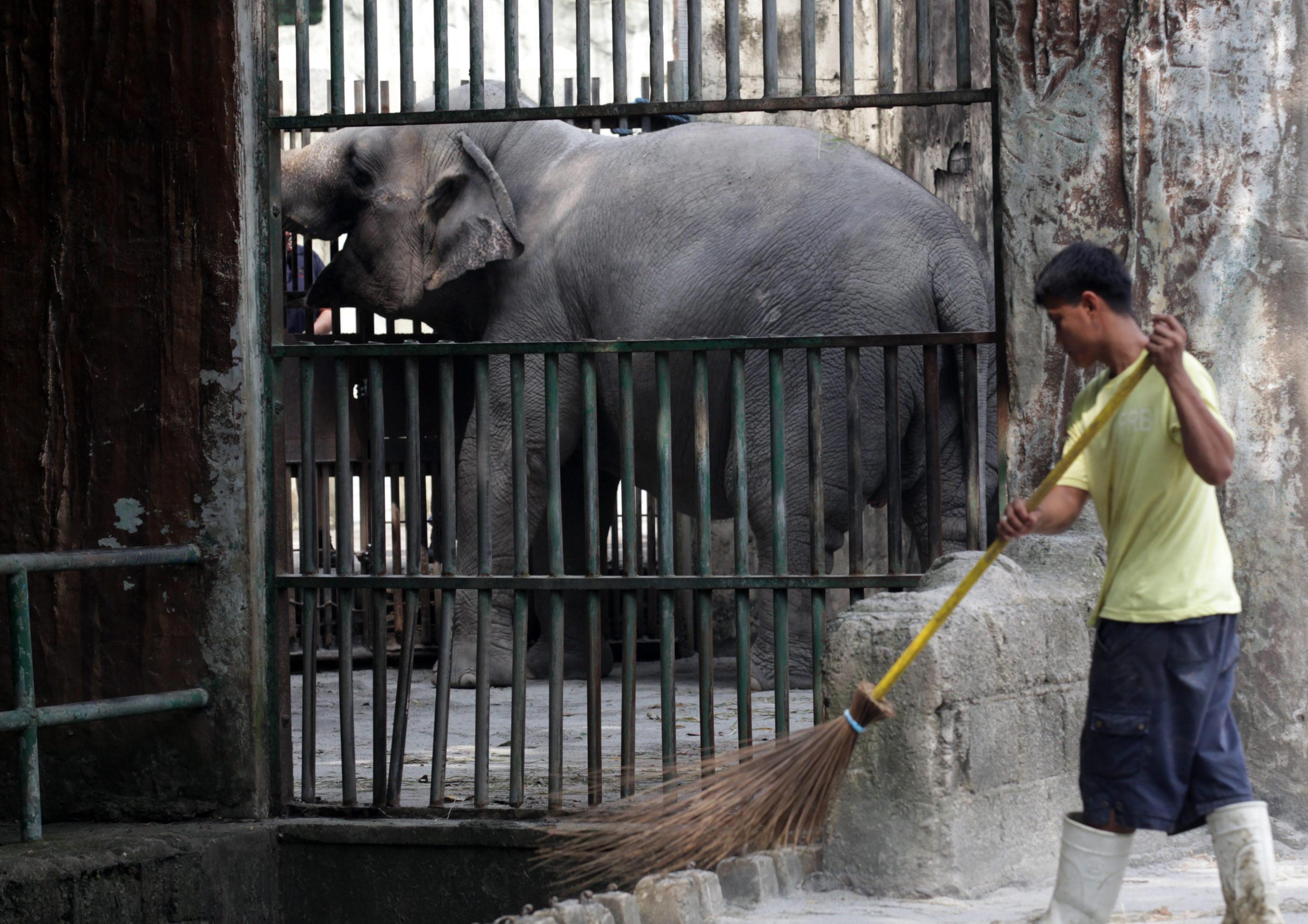 Maali the Lonely Elephant07