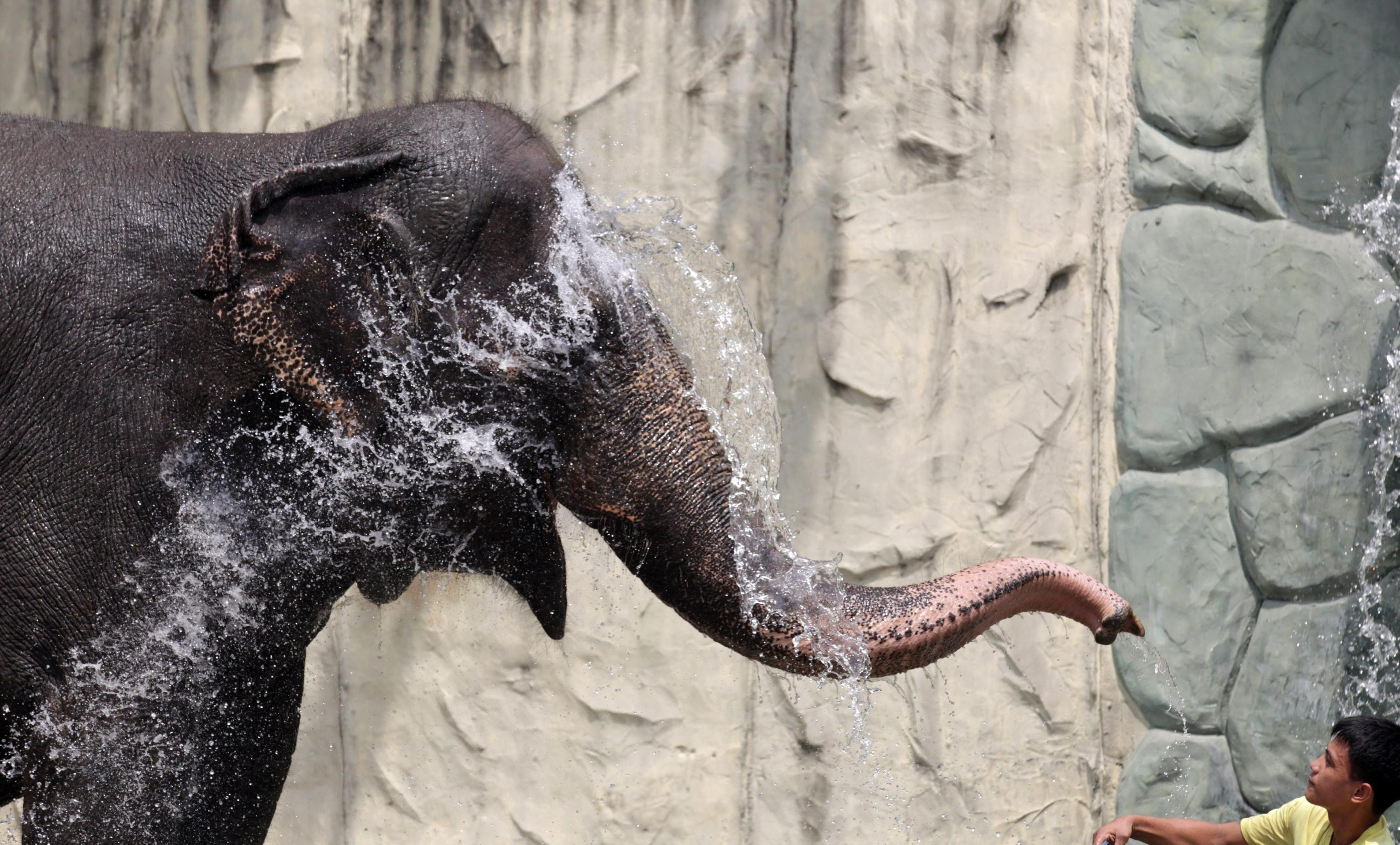 Maali the Lonely Elephant08