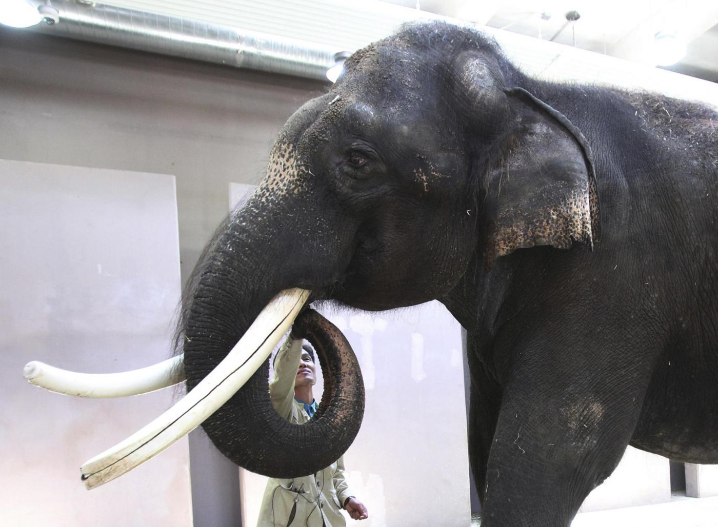 Un elefante parlante allo zoo di Ever Land in Corea del Sud03