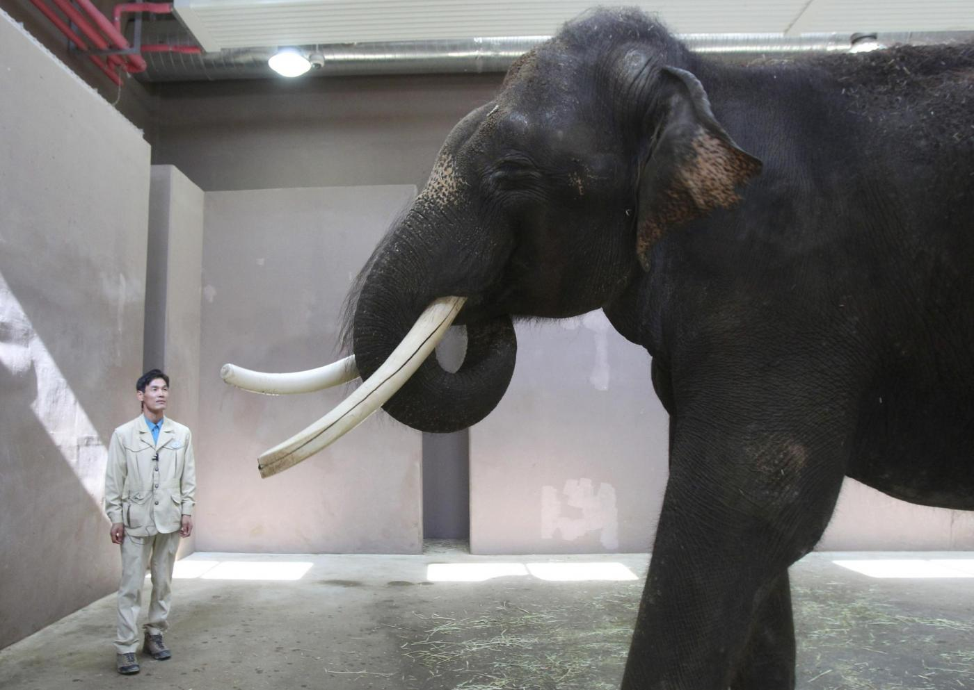 Un elefante parlante allo zoo di Ever Land in Corea del Sud02