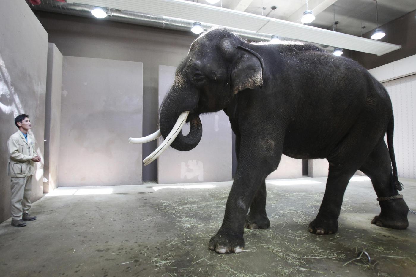 Un elefante parlante allo zoo di Ever Land in Corea del Sud01