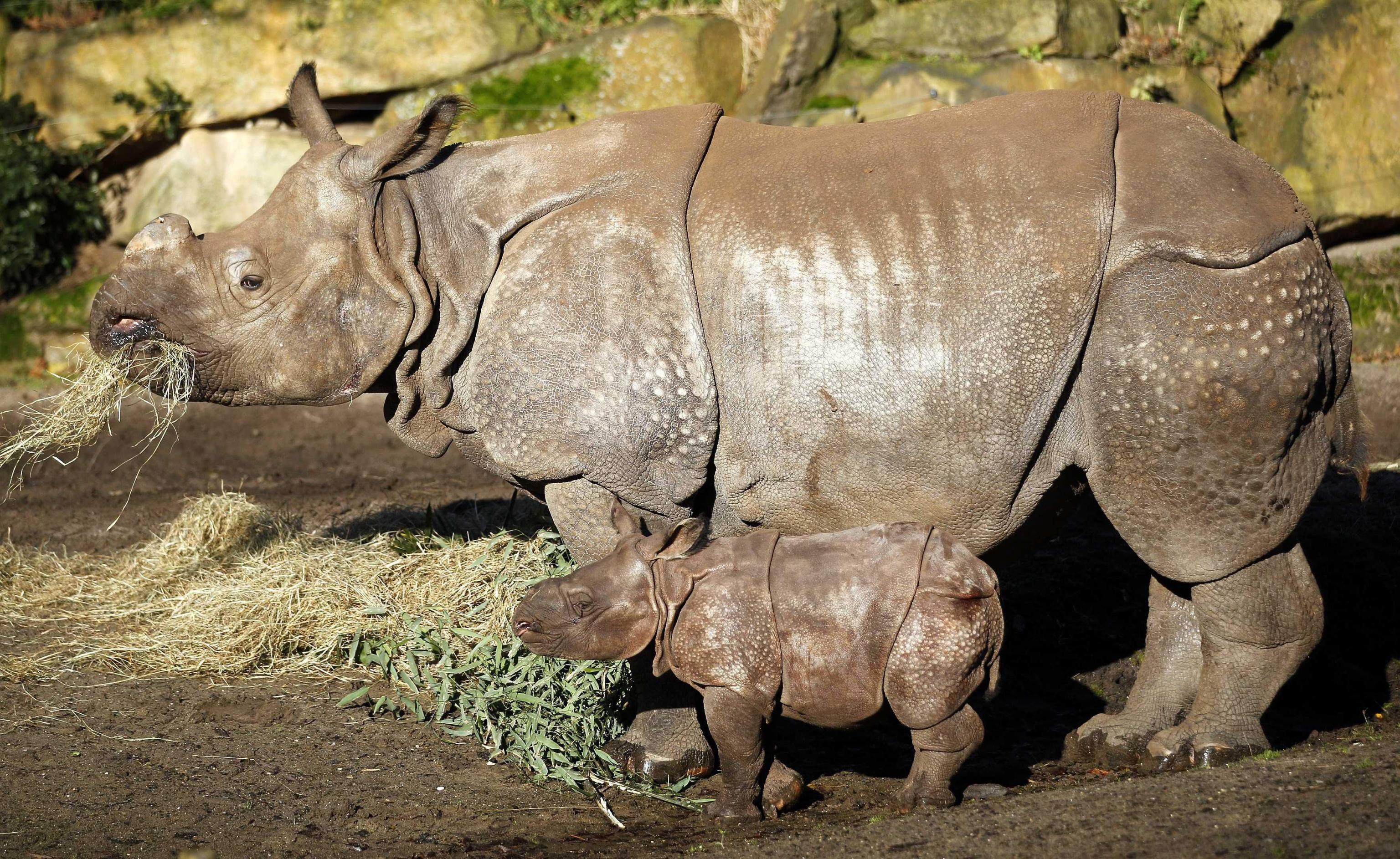 Rhino Baby Zwatra03