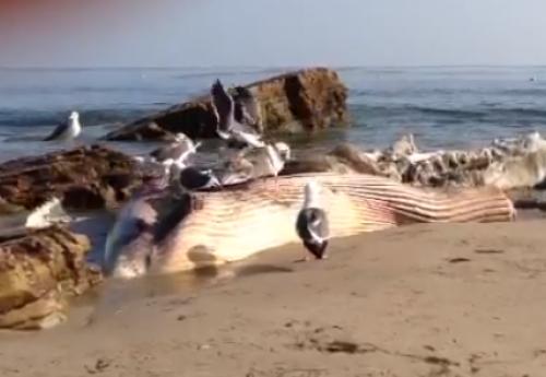 Balena morta in spiaggia a malib nei pressi della casa di for Disegno della casa sulla spiaggia