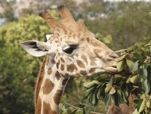 Sydney, natale allo zoo con regali e sorprese05