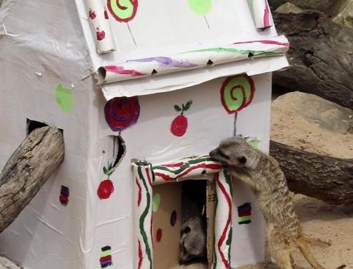 Sydney, natale allo zoo con regali e sorprese04