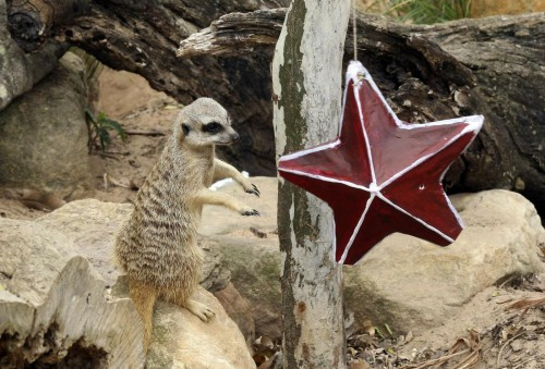 Sydney, natale allo zoo con regali e sorprese03