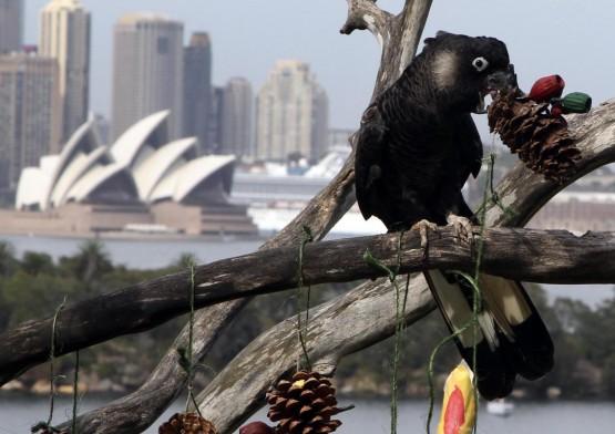 Sydney, natale allo zoo con regali e sorprese02