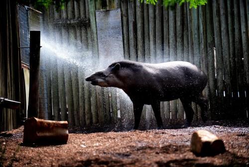 Taronga Zoo hot weather01