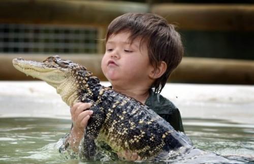 Australia, riesce a domare un alligatore a soli tre anni 05