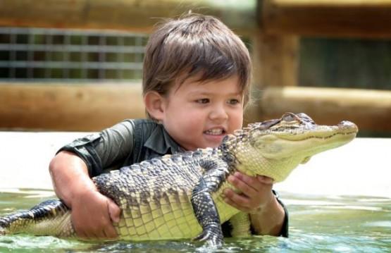 Australia, riesce a domare un alligatore a soli tre anni 04