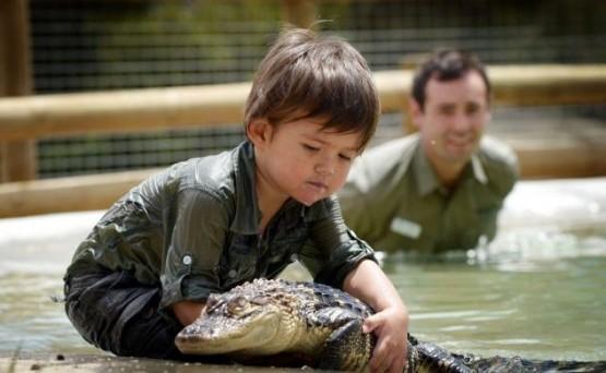 Australia, riesce a domare un alligatore a soli tre anni 03
