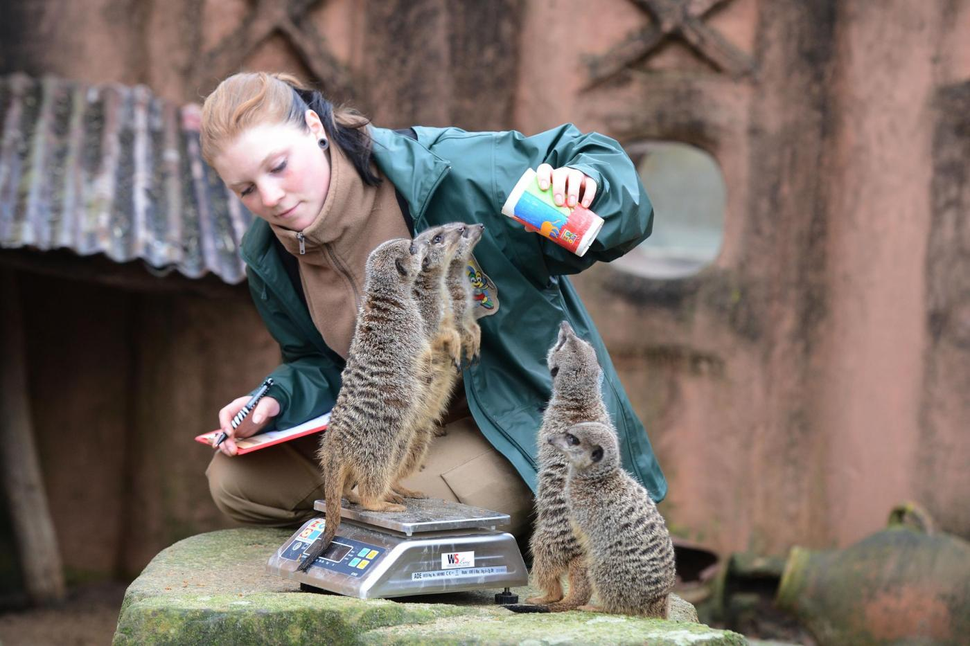 Inventario allo zoo di Hannover06