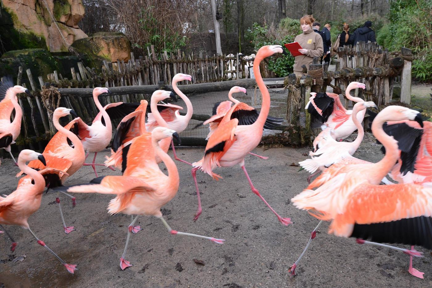 Inventario allo zoo di Hannover04