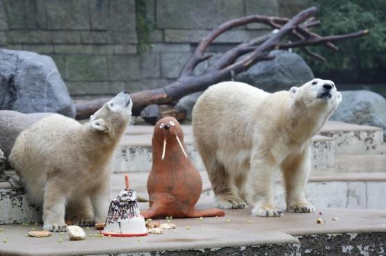 L'orsetto polare Anori compie un anno06