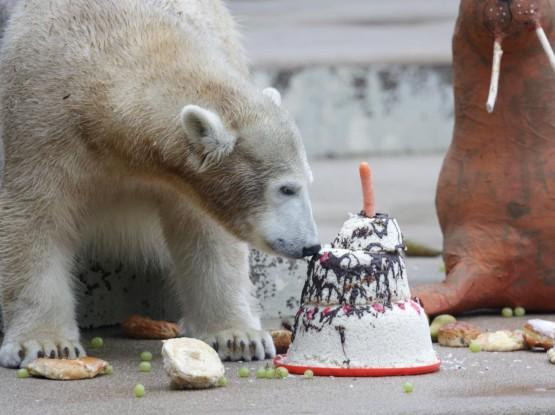 L'orsetto polare Anori compie un anno04