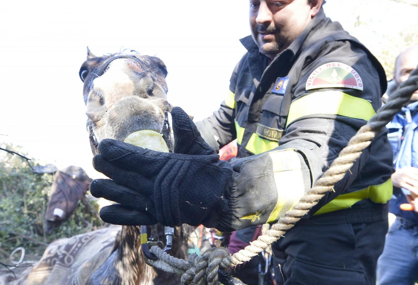 Roma: Salvataggio cavallo nel fiume Aniene06