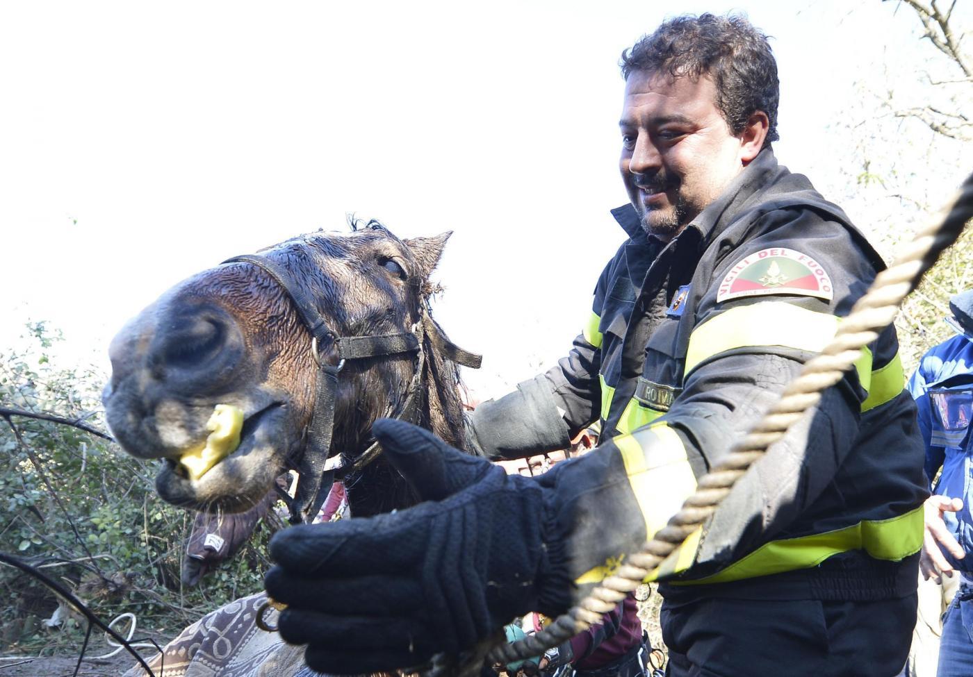 Roma: Salvataggio cavallo nel fiume Aniene16