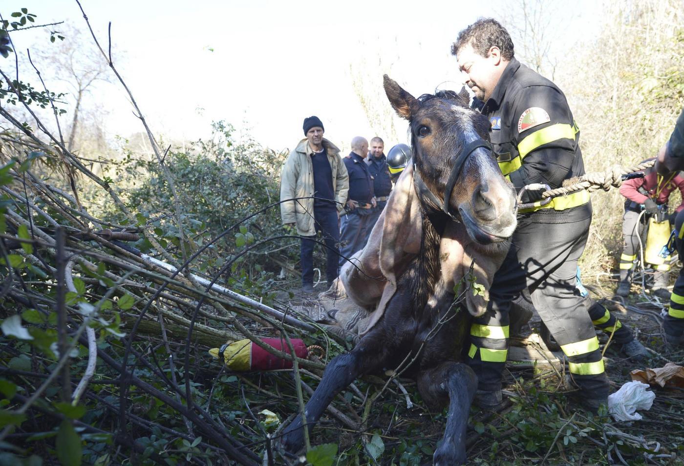 Roma: Salvataggio cavallo nel fiume Aniene11