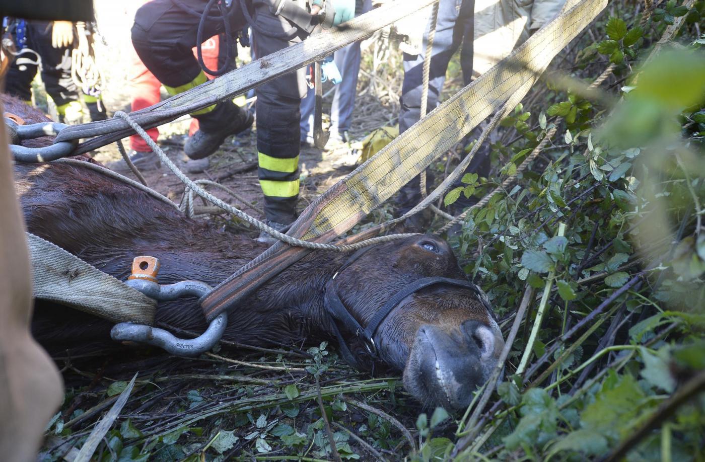 Roma: Salvataggio cavallo nel fiume Aniene10