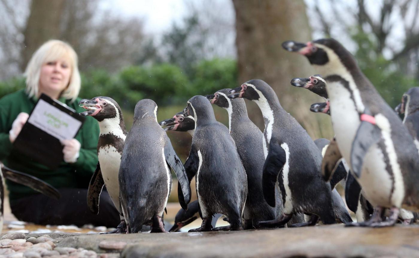 Annuale inventario allo Zoo di Londra02