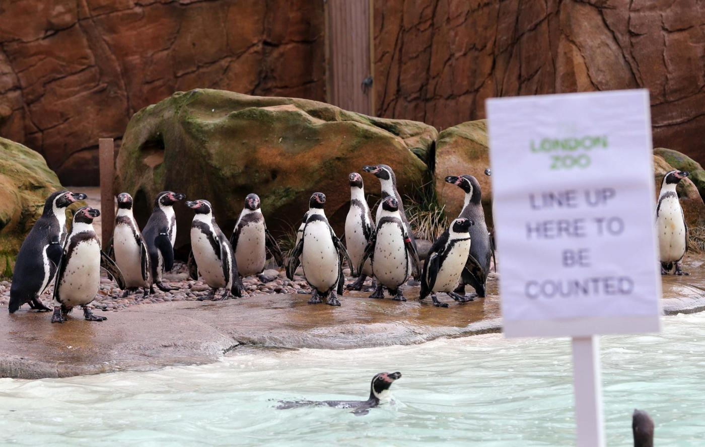 Annuale inventario allo Zoo di Londra01